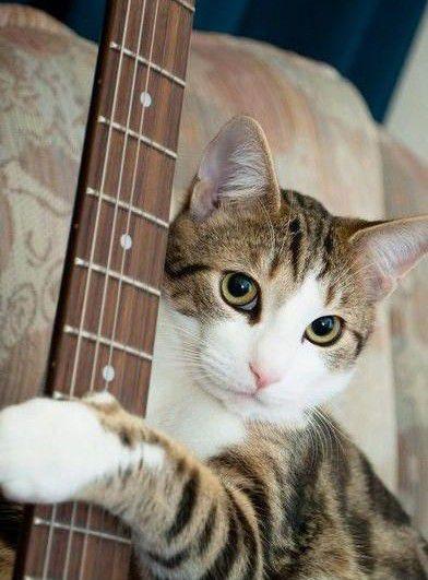 若干 ギターが弾ける 猫