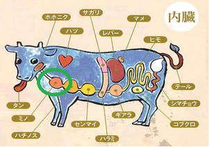牛の 4つの 胃袋