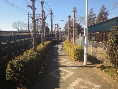aruki479.jpg