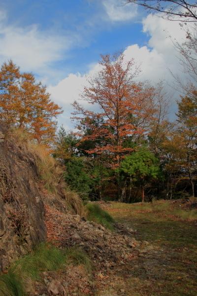 割谷林道-181015