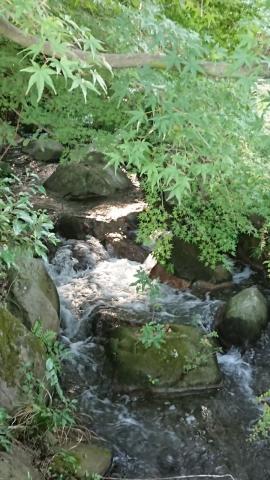 郷土の森、お散歩_181021_0071_R