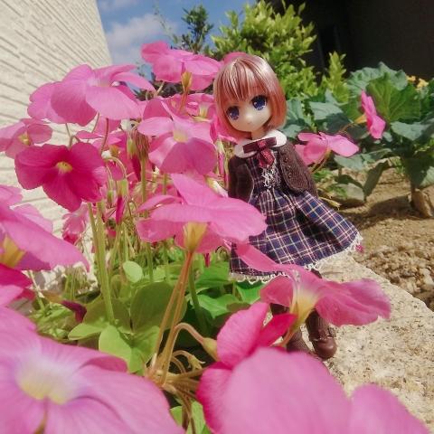 2018-11-04-ピンクの花&リアム