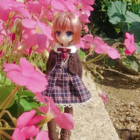 2018-11-04-ピンクの花