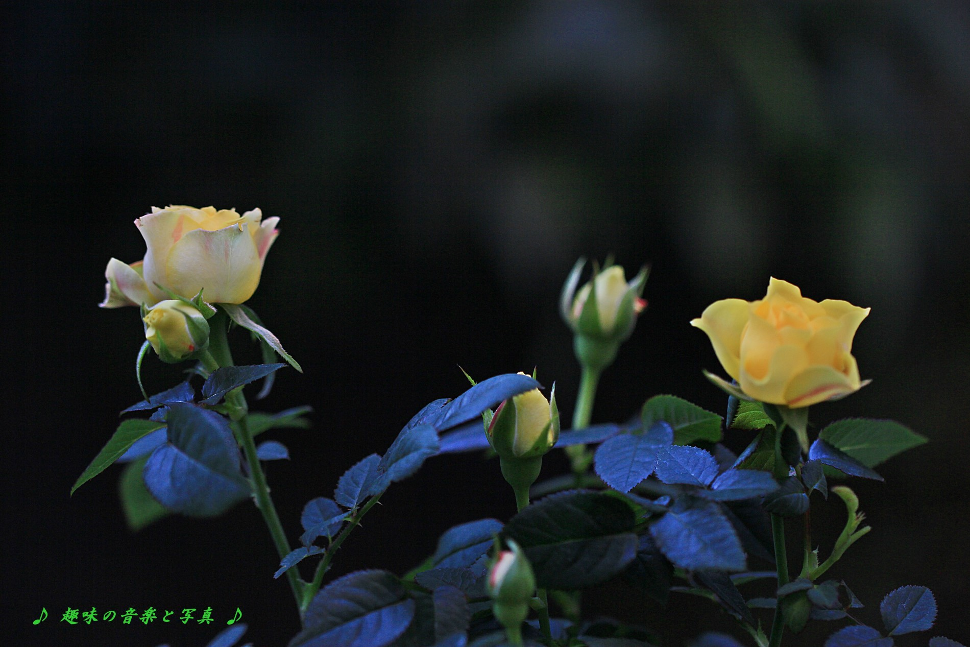 012_2254.jpg