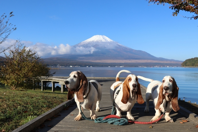 富士山0010