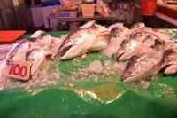 鮭の頭特価100元181125