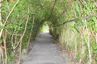 緑のトンネル181230
