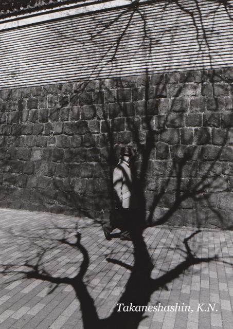 裸木 (2)-001