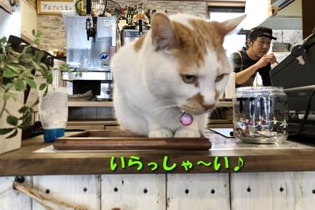 箱根路③6