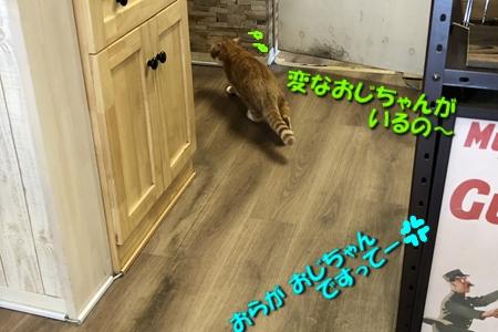箱根路③15