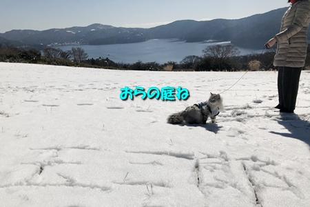箱根路④6