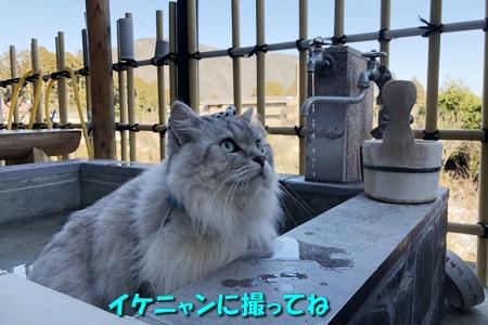 箱根路⑤11