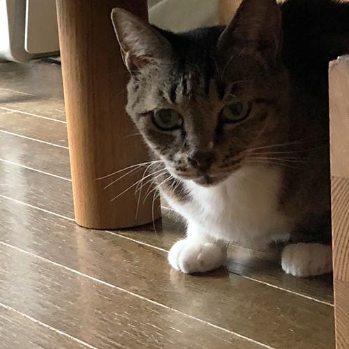 預かり子猫は里親募集中【初日】
