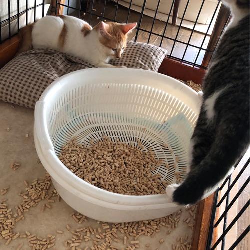 子猫のトイレ事情【里親募集中】 朝だろうが真夜中だろうがおかまいなしのトイレチップぶっちゃけ遊び
