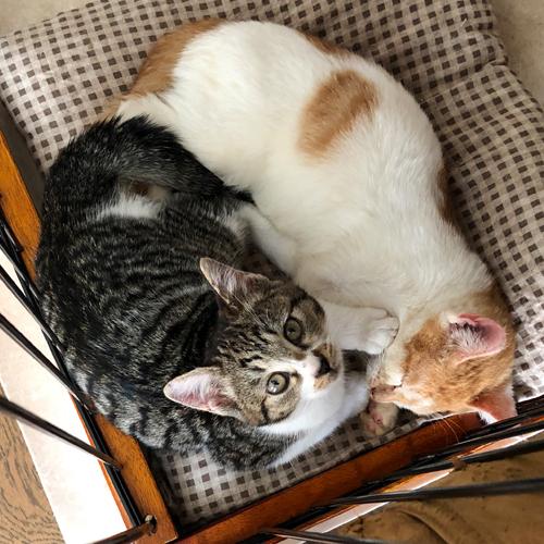 子猫のトイレ事情【里親募集中】 こうしてこれから日中はずっとお眠りになる