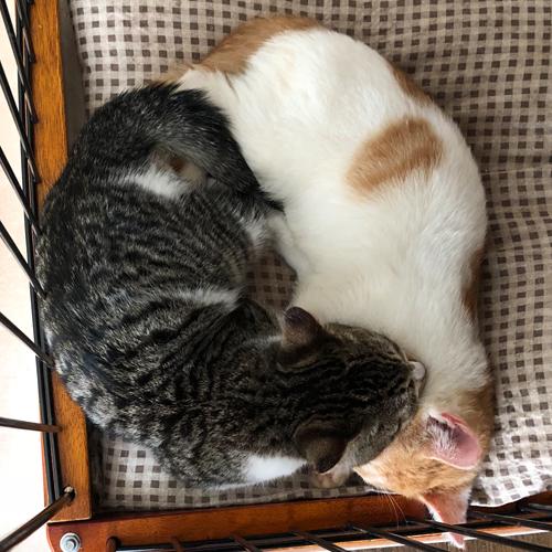 子猫のトイレ事情【里親募集中】 メンドーといえばメンドーだけどオモシロいほうが勝つかな