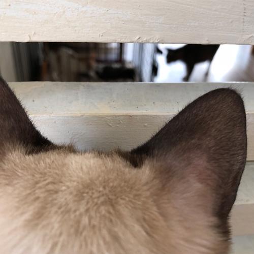 子猫のトイレ事情【里親募集中】 ドアの外でジッと凝視するお方が