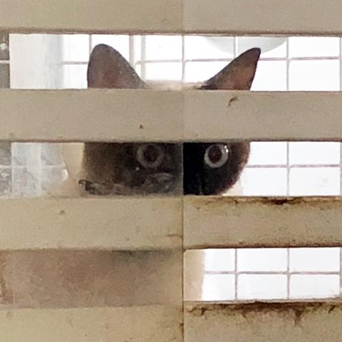 子猫のトイレ事情【里親募集中】 子猫たち早く帰ればいいのに