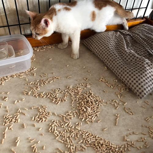 子猫のトイレ事情【里親募集中】 はいはい 掃除しますよ
