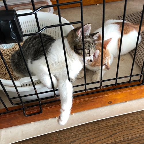 子猫のトイレ事情【里親募集中】 そこはベッドじゃありませんよ