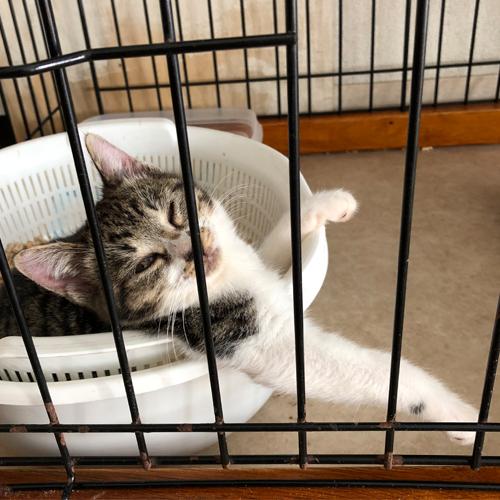 子猫のトイレ事情【里親募集中】 いやいや やめて! そこでお眠りなられるのは