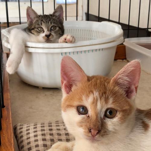 子猫のトイレ事情【里親募集中】 風呂か!