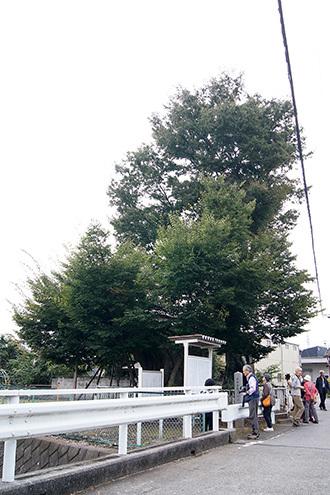 181004太田市市場大ケヤキ①