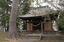 181004太奈荷神社のマツ④