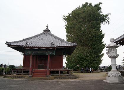 181004浄蔵寺のイチョウ③