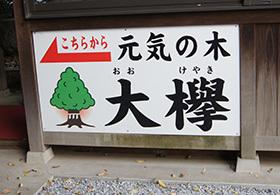 181126鎮守氷川神社欅