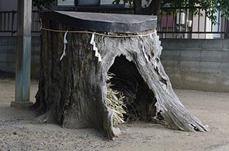 190128鷲香取神社の銀杏⑦