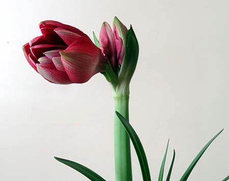 0121開花