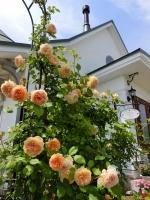 アトリエジェムカフェ薔薇