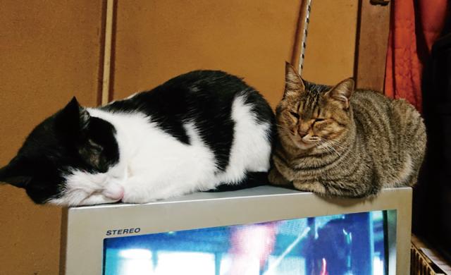 猫たち02