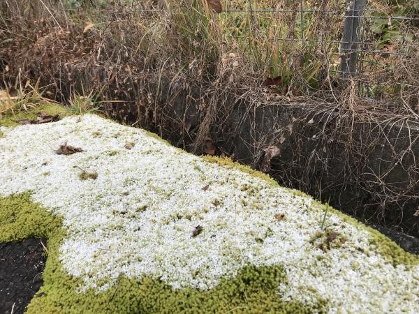 181209-初雪観測