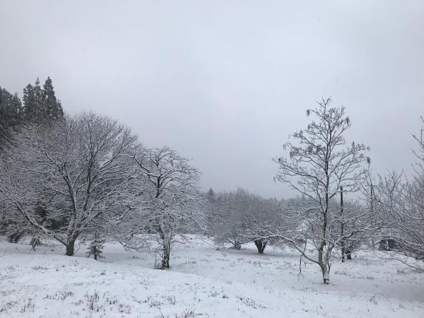 190122-牧戸の積雪