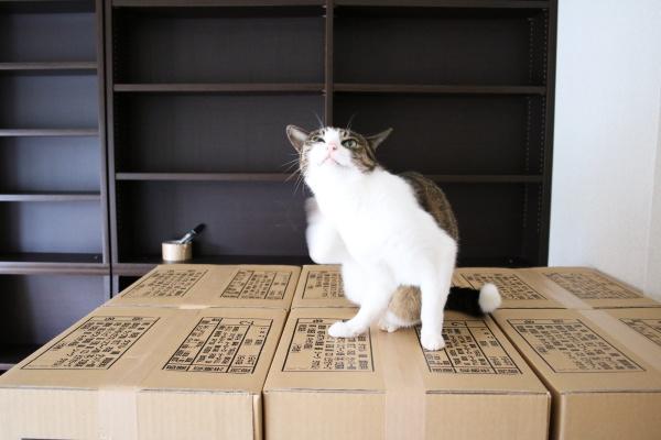 猫は箱へ飛ぶ