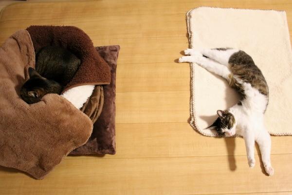 猫は長崎へやって来た