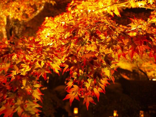 s円通院の紅葉