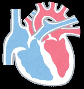 心臓、断面図