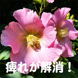 しびれ,大阪,京都,神戸,名古屋