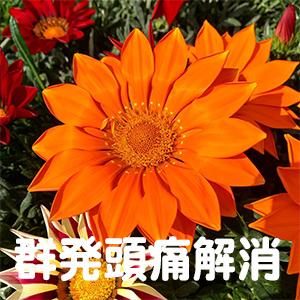 群発頭痛,福岡,北九州,下関,大分