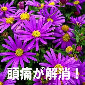 頭痛,片頭痛,岡山,広島,福岡