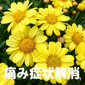 お尻,痛い,岡山,広島,香川,徳島