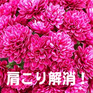肩こり,春日井,名古屋,豊田