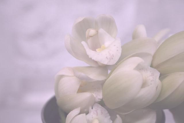白い花 訃報