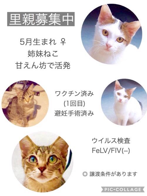 fc2blog_2018111501090425f.jpg