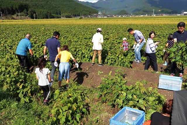 181014-黒枝豆収穫祭-02-S