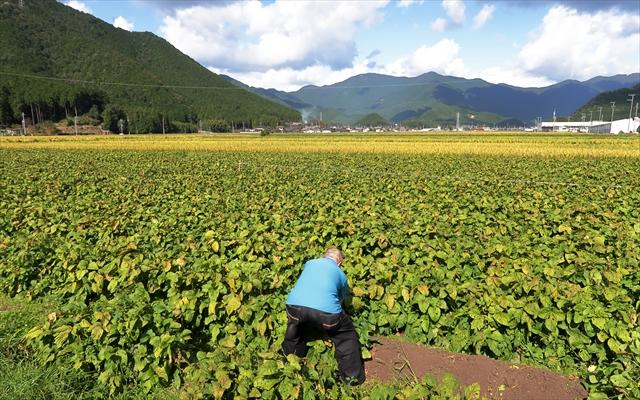 181014-黒枝豆収穫祭-03-S