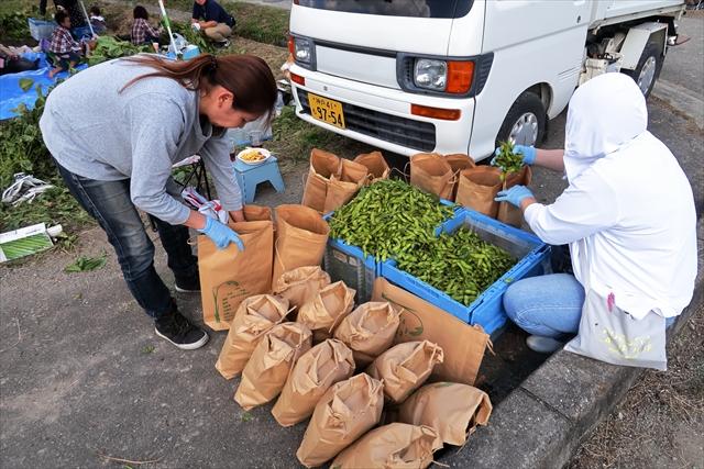 181014-黒枝豆収穫祭-28-S